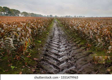 Tire track in a field with Lilies in autumn