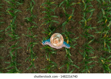 Tired exhausted farmer standing in cultivated sorghum field looking over the crops after hardworking agricultural activity, aerial high angle view from drone pov