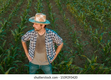 Tired exhausted farmer standing in cultivated sorghum field looking over the crops in his sweaty shirt after hardworking agricultural activity