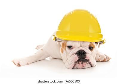 Tired Lazy Bulldog Wearing a Yellow Construction Hard Hat