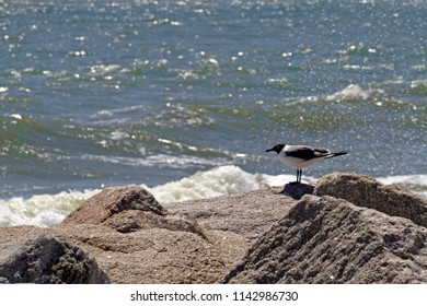 A tired, red beaked seagull rests on a bulwark of glittering boulders and is sprayed by the sea as ocean waves come crashing up against them