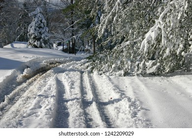 Tirei tracks skidding around heavy, snow laden pine branches down on an unplowed road in winter