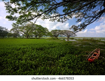 Tissamaharama - Lake Tissa with its beautiful majestic mushroom trees, covered with water hyacinths, red fishing boat in foreground. Sri Lanka.