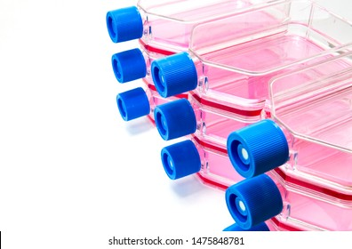 Tissue cell culture flask containing medium for scientific research in laboratory