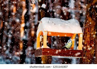 tit in the snowy winter bird feeder.