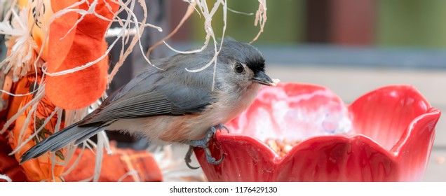 Titmouse bird from Kentucky with decorations