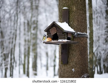 Titmouse eating from the bird feeder in winter