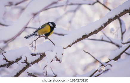 Titmouse on a snowy winter day sitting on a tree branch.