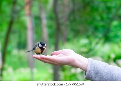 titmouse sits on a man's hand with a pine nut in its beak on a clear summer day