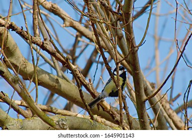 The tits, chickadees, and titmice constitute the Paridae, a large family of small passerine birds.
