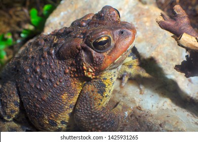 toad brown amphibian wild environment bufo frog