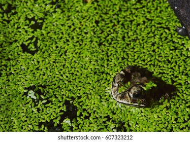 toad floating in water for relaxing on night