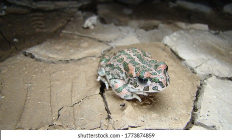 toad frog contemplates a river that has dried up toad looks at its devastating environment close up toad closeup frog Amphibians, animals, animal, wildlife, wild nature, river, swamp, forest, woods