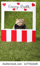 Toad at a kissing booth waiting for a brave princess