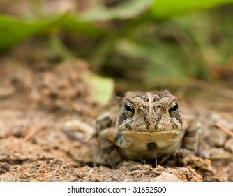 toad in natural habitat