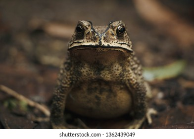 Toad Sitting On The Ground