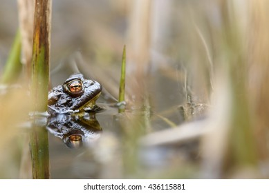 A toad in a small pond