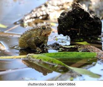 A toad trying not to be seen.