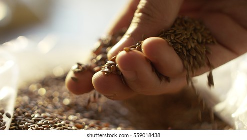 toasted barley malt to make dark and light beer. concept of nature and creation of natural products such as beer and fresh hops. organic and natural malt for brewmaster