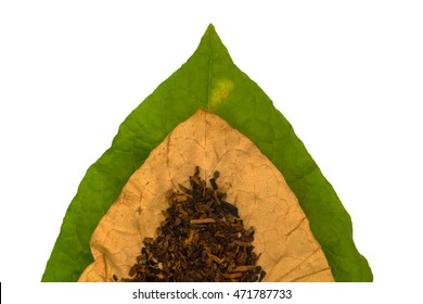 Tobacco dry  and  green tobacco   leaf on white background