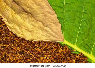 Tobacco dry leaf  on green tobacco  leaf background