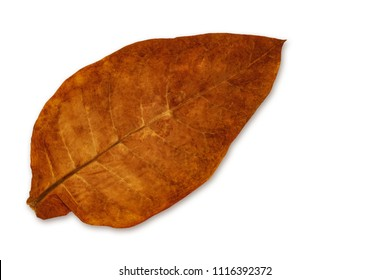 Tobacco dry leaf on white background
