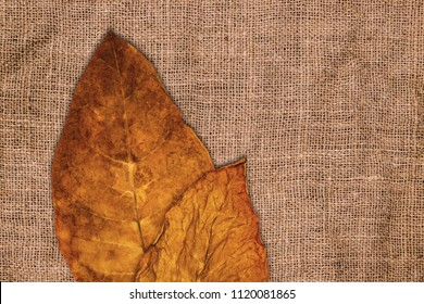 Tobacco dry leaves onBrown crumpled burlap texture background, close up