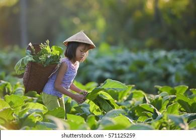 Tobacco farmers' children
