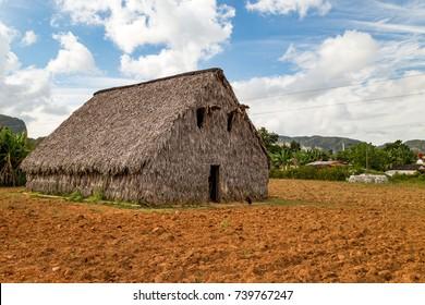 Tobacco farms in Vinales, Cuba