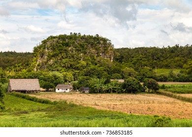 Tobacco farms in Vinales, Cuba. Karst rock formations on the background