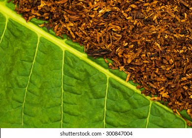 Tobacco  green  leaf and  Dry smoking tobacco
