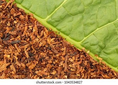 Tobacco green  leaf texture and tobacco dry leaf cut background.