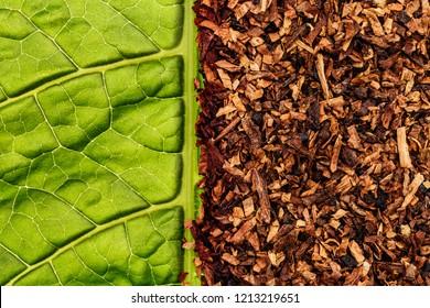 Tobacco green leaf texture and tobacco dry leaf cut background.