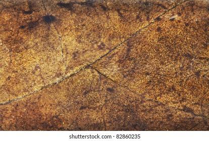 tobacco leaf background