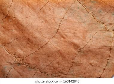 Tobacco leaf texture