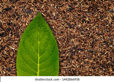 Tobacco leaves background, close up. High quality green tobacco leaf and dry cut tobacco big leaf, macro closeup