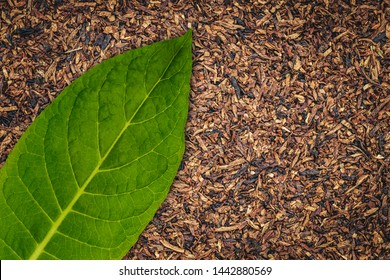 Tobacco leaves texture, close up. High quality green tobacco leaf and dry cut tobacco  big leaf, macro close up, top view, copy space