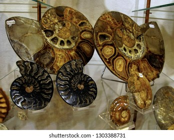 TOBLACH, ITALY - AUG 1, 2018 - Fossil ammonites on display in a shop in Toblach, Italy