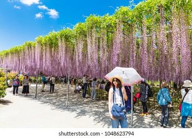 TOCHIGI,JAPAN-MAY 11,2017: Many tourists walking around  Purple waterfall Wisteria in full bloom ,It beautiful image at Ashikaga flower park