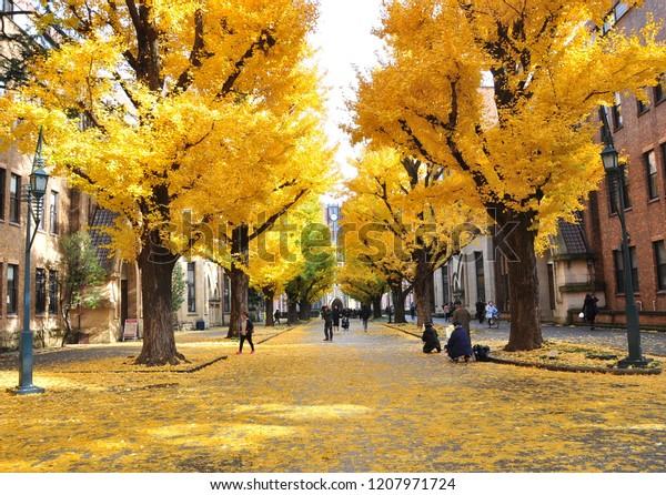 Todai Autumn University Tokyo Acronym Todai Stock Photo