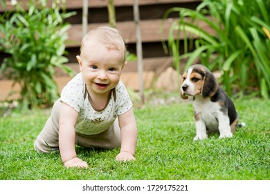Toddler and Beagle howl in the backyard. a creeping child and puppy games on the lawn. Dog and kid friendship.