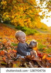 Toddler boy enjoy autumn with dog friend. Small baby toddler on sunny autumn day walk with dog. Warmth and coziness. Happy childhood. Sweet childhood memories. Child play with yorkshire terrier dog.