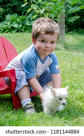 Toddler boy with little white dog in the back yard