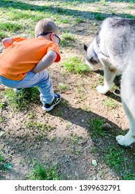 Toddler boy looking at the husky dog smelling the ground