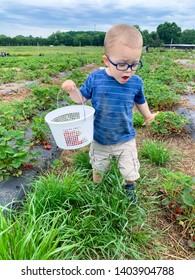 Toddler boy looking for strawberries at the farm. Toddler looks surprised. Wears eyeglasses