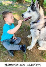 Toddler boy meets new friend at the park. Husky dog is very patient and sitting still.