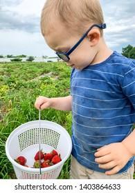 Toddler boy outdoors looking at the strawberries in his basket. Wears eyeglasses,