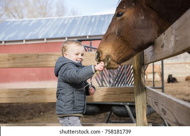Toddler Boy Visiting a Local Urban Farm and Feeding the Horses with Hay