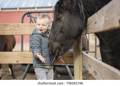 Toddler Boy Visiting a Local Urban Farm and Feeding the Horses with Hay. Laughing, Smiling & Happy
