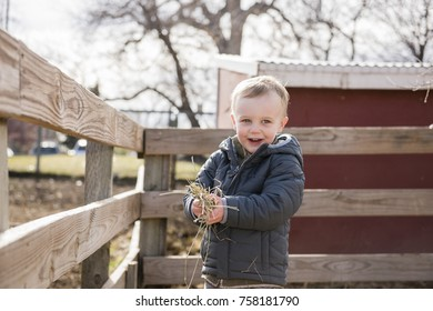 Toddler Boy Visiting a Local Urban Farm and Feeding the Cows with Hay